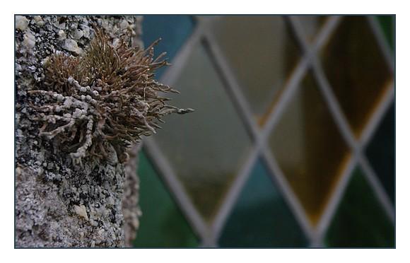 lichenfaçadest-Egarec