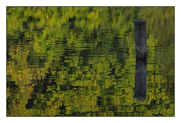 piquet bois et son reflet avec reflet des arbres de la berge