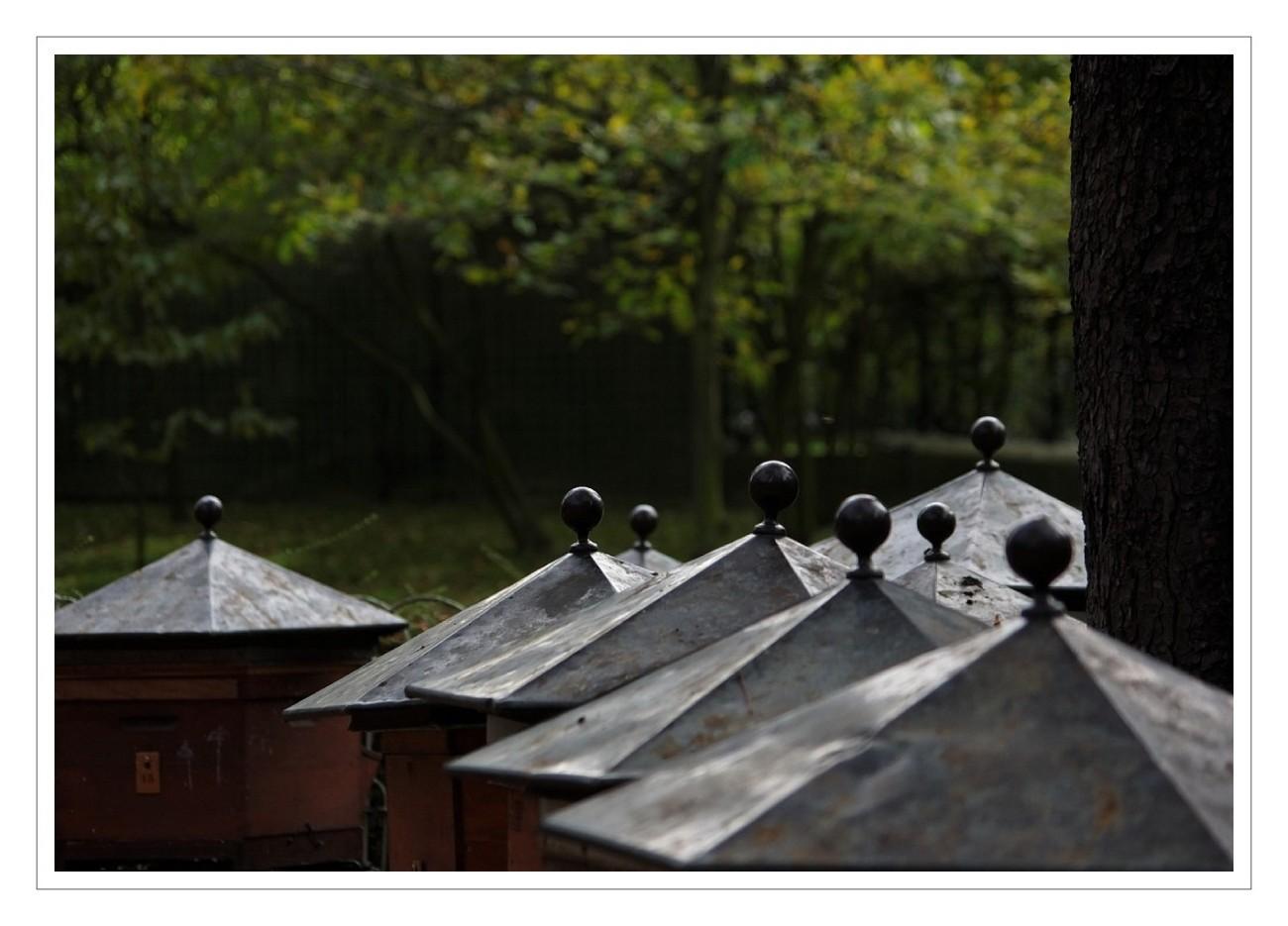 Le rucher du jardin du luxembourg la tribu d 39 anaximandre des photos au fil des jours de - Comment aller au jardin du luxembourg ...