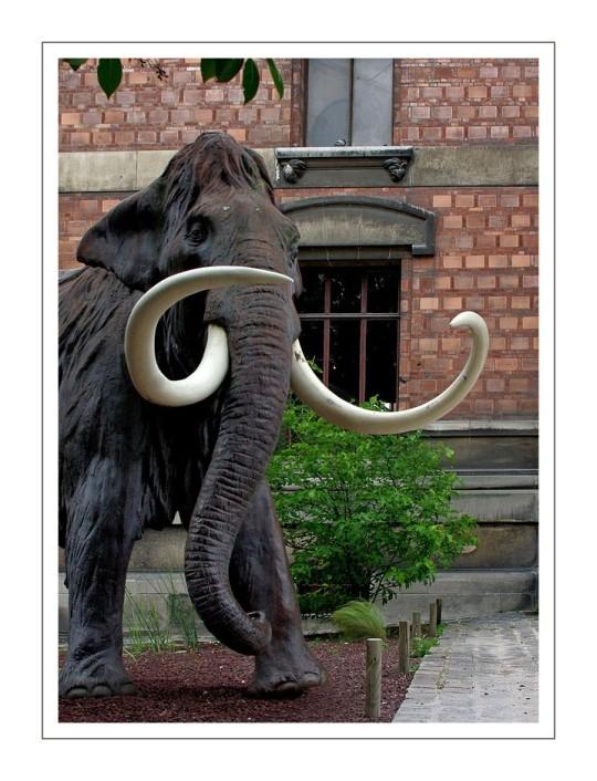 mammouth devant la galerie de paléontologie