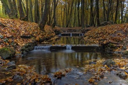ruisseau bois des Templiers, pose 15 secondes, pose longue, sous-bois d'automne
