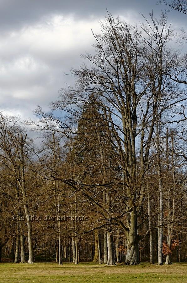 les arbres du parc du château de Rambouillet