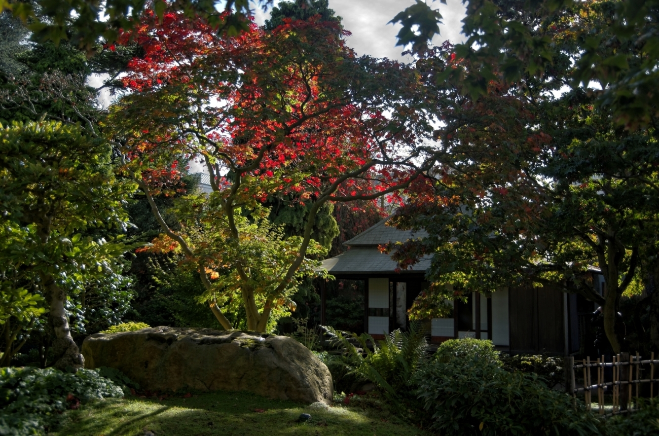 Paris, Jardin Albert Kahn, jardin japonais, rouge, automne