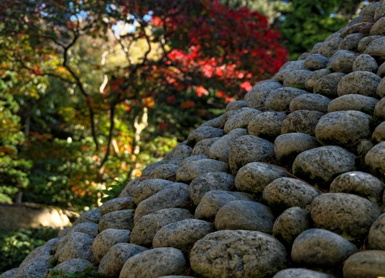 Paris, Jardin Albert Kahn, jardin japonais, rouge, automne, bambou
