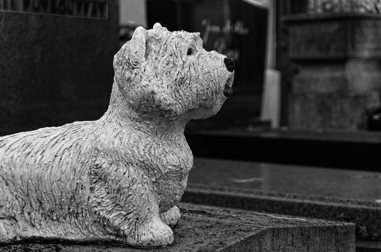 cimetière du Père Lachaise, Paris, statue de chien sur  pierre tombale, noir et blanc