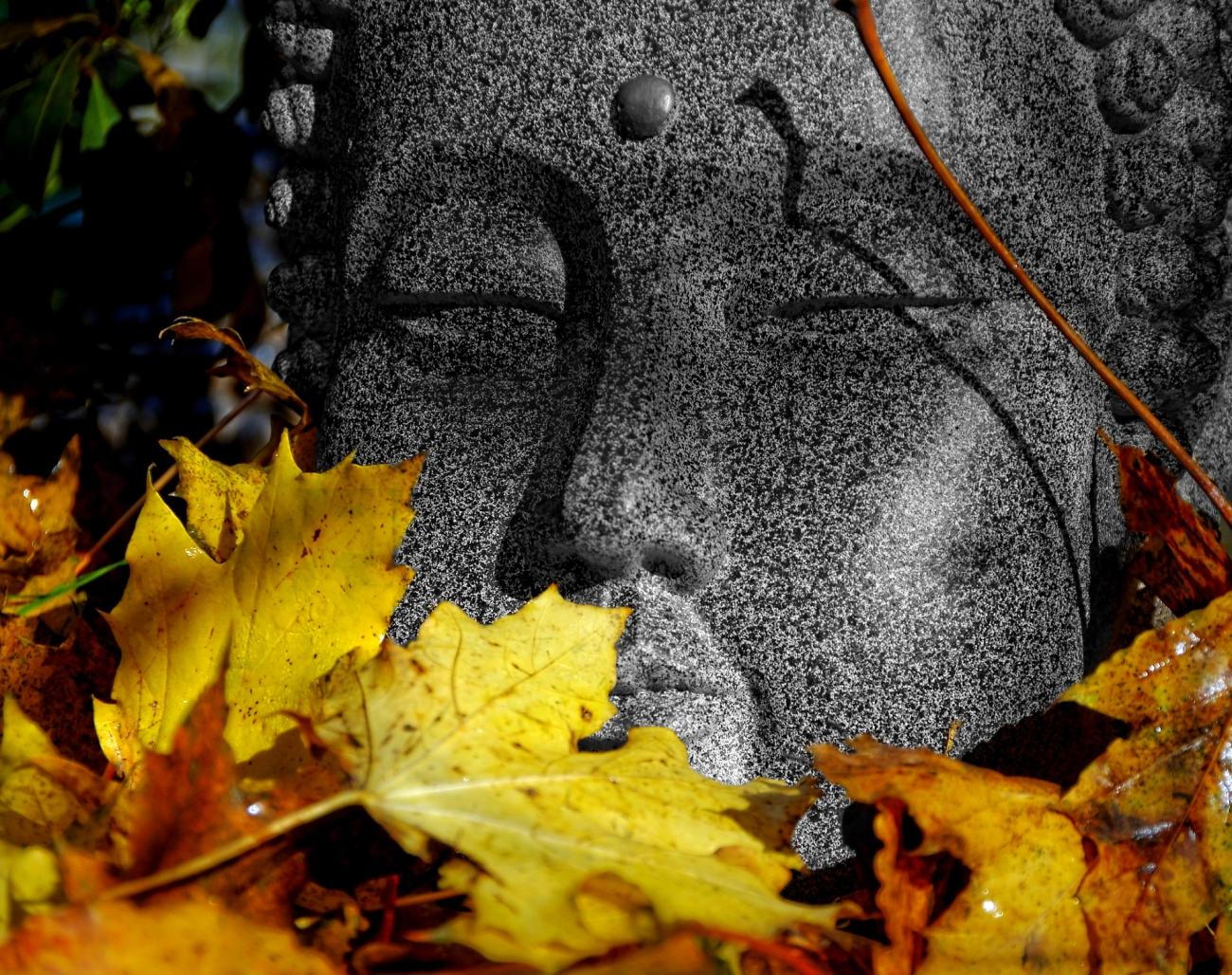 Bouddha, feuilles, automne, nature morte