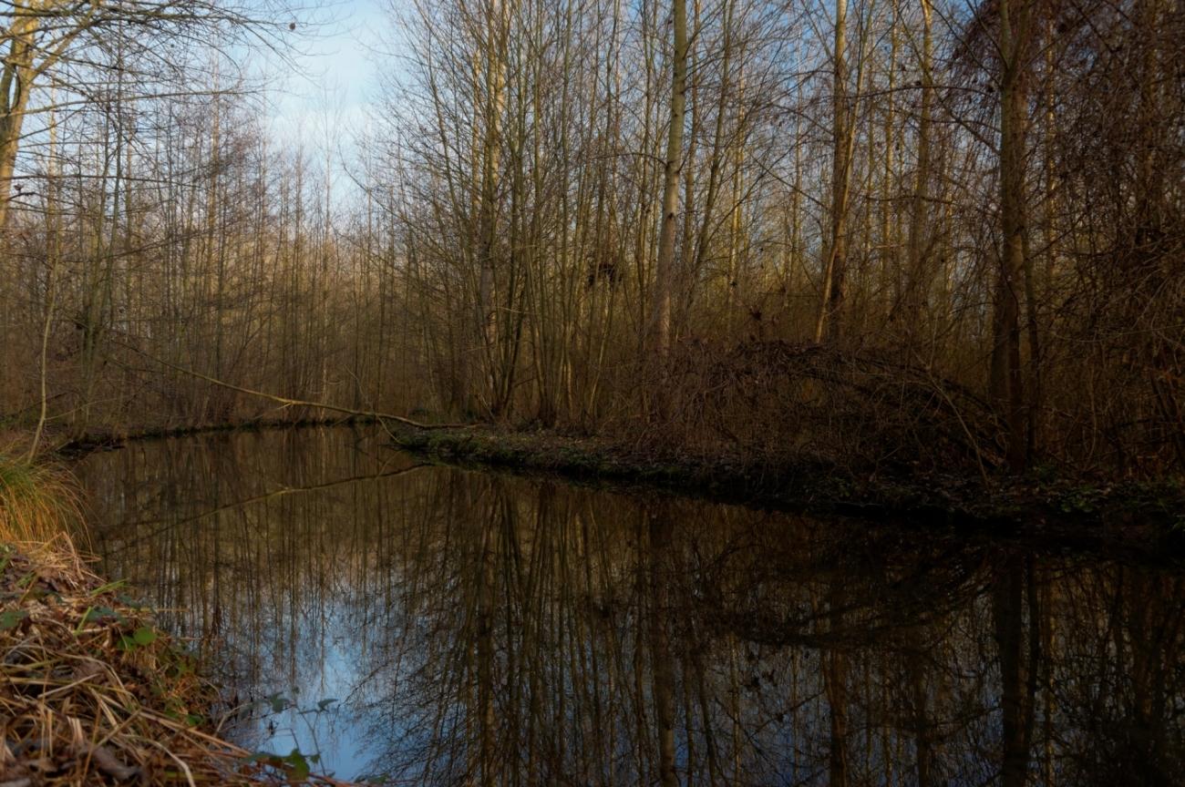 rivière, bord de l'eau, arbres, arbres en hiver, nature, faune et flore, paysage,