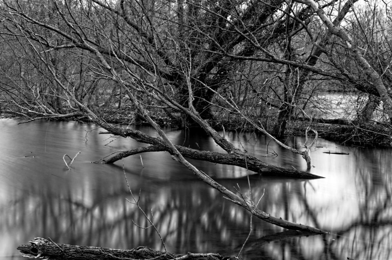 bois morts sur l'étang, pose longue, noir et blanc, étangs de Vert-le-Petit,