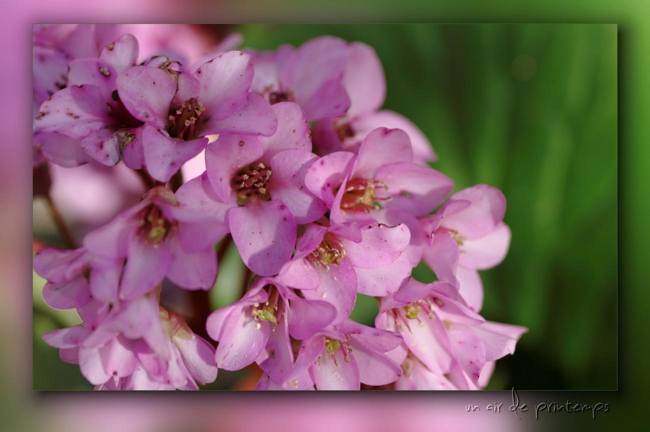 fleurs, rose, jardin, printemps, faune et flore