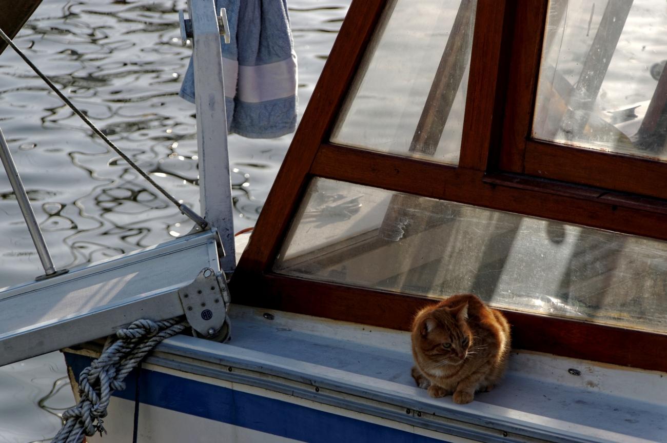 bateau, chat, bretagne, morbihan, Vannes