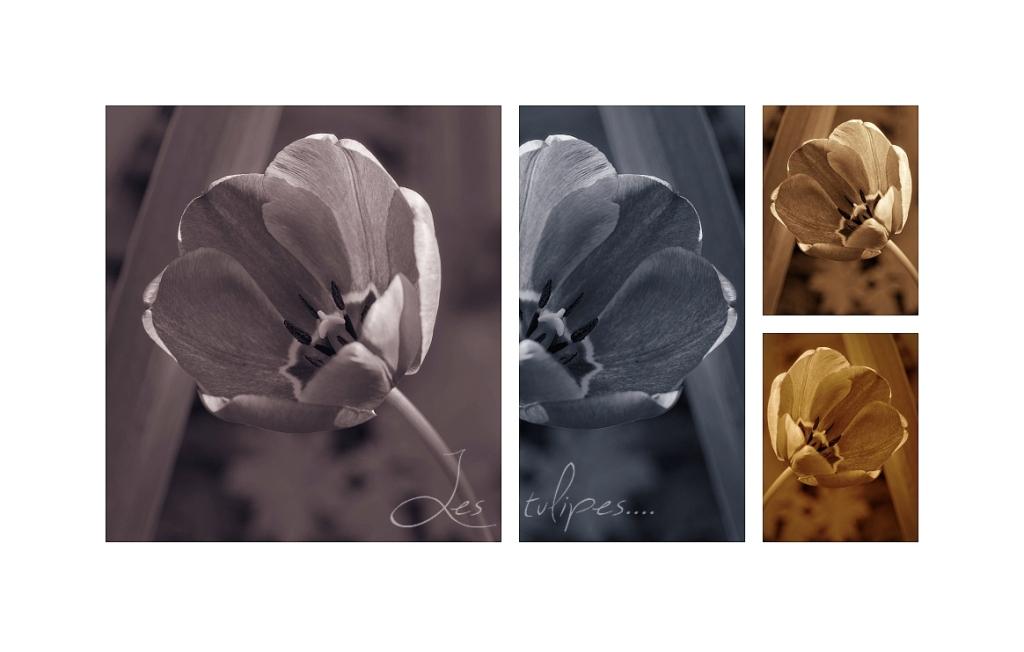 quadriptique tulipes2