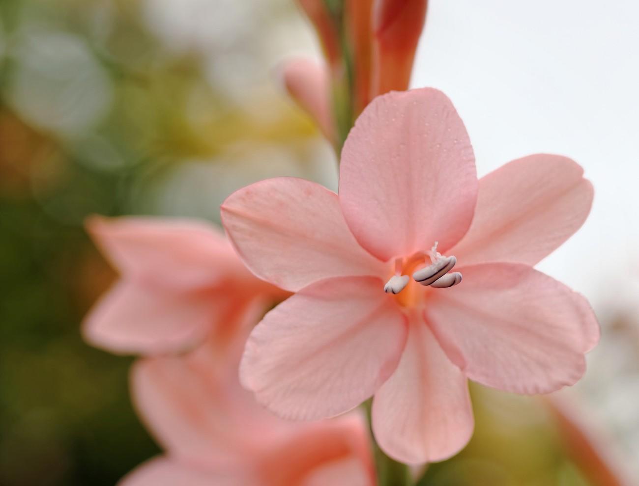fleur rose jardin devant maison face