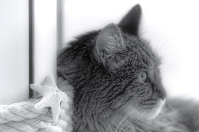 Anaximandre, chat, déco bord de mer, noir & blanc