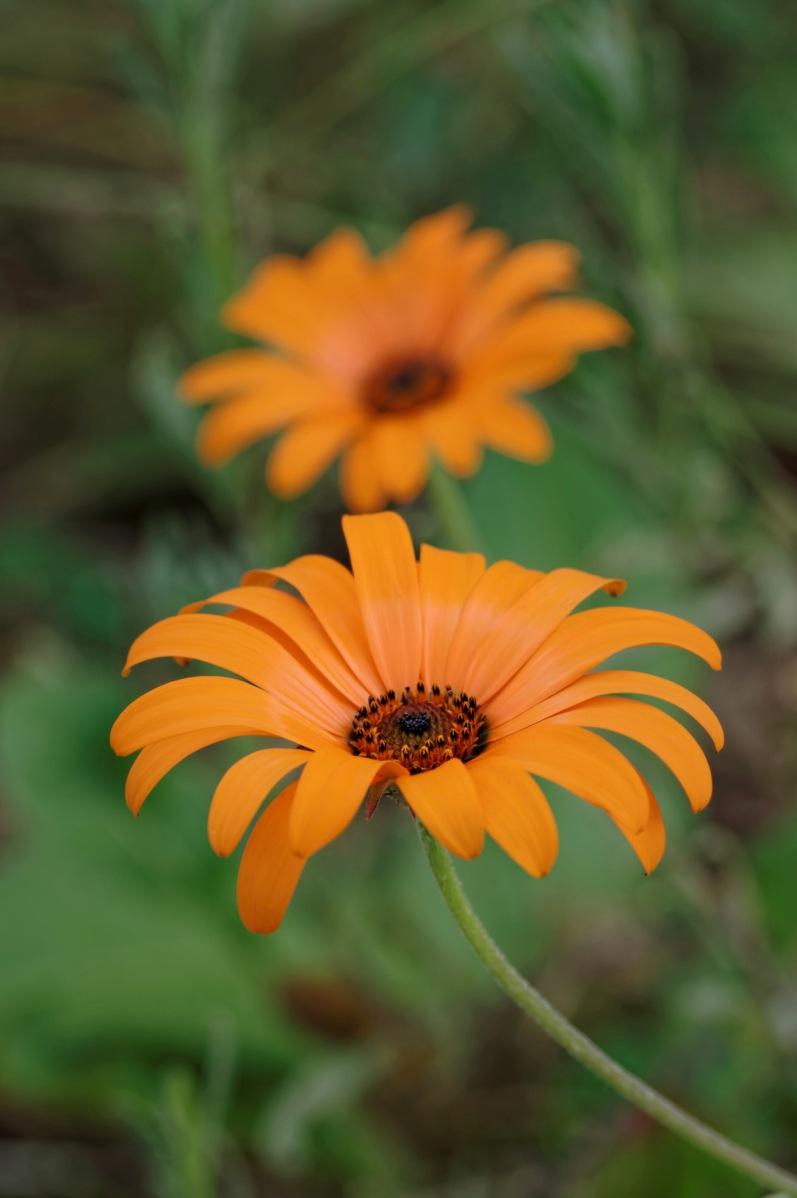 fleur, orange, faune et flore,
