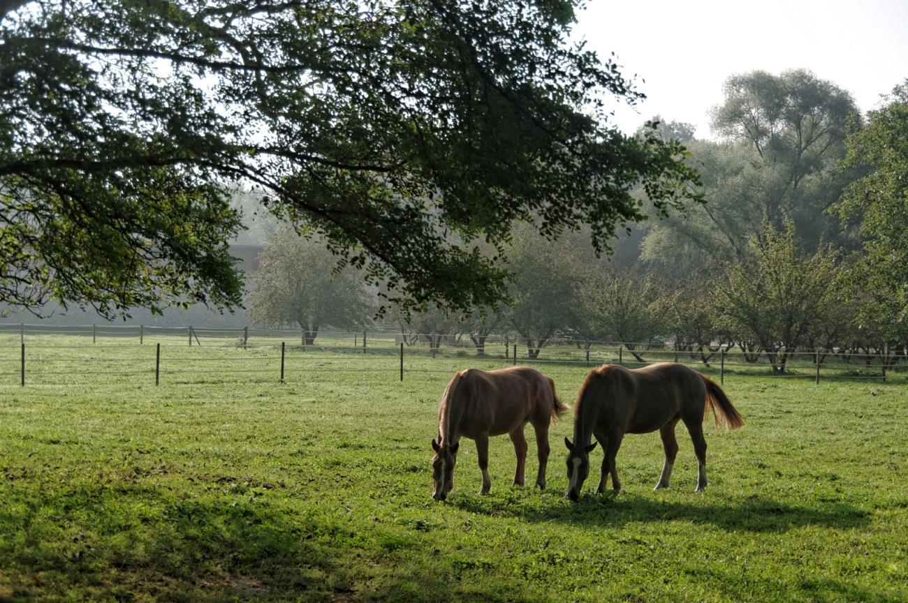 soleil levant, chevaux,