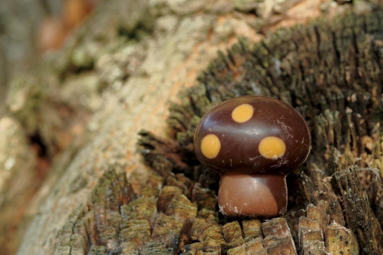 chocolat champignon, douceur, chocolat, automne, nature morte, friandise