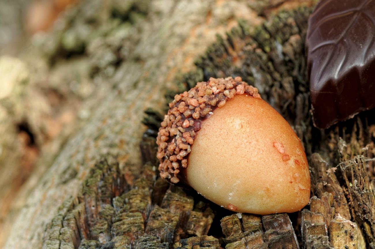 friandise, gland pâte d'amande, douceur, chocolat, automne, nature morte