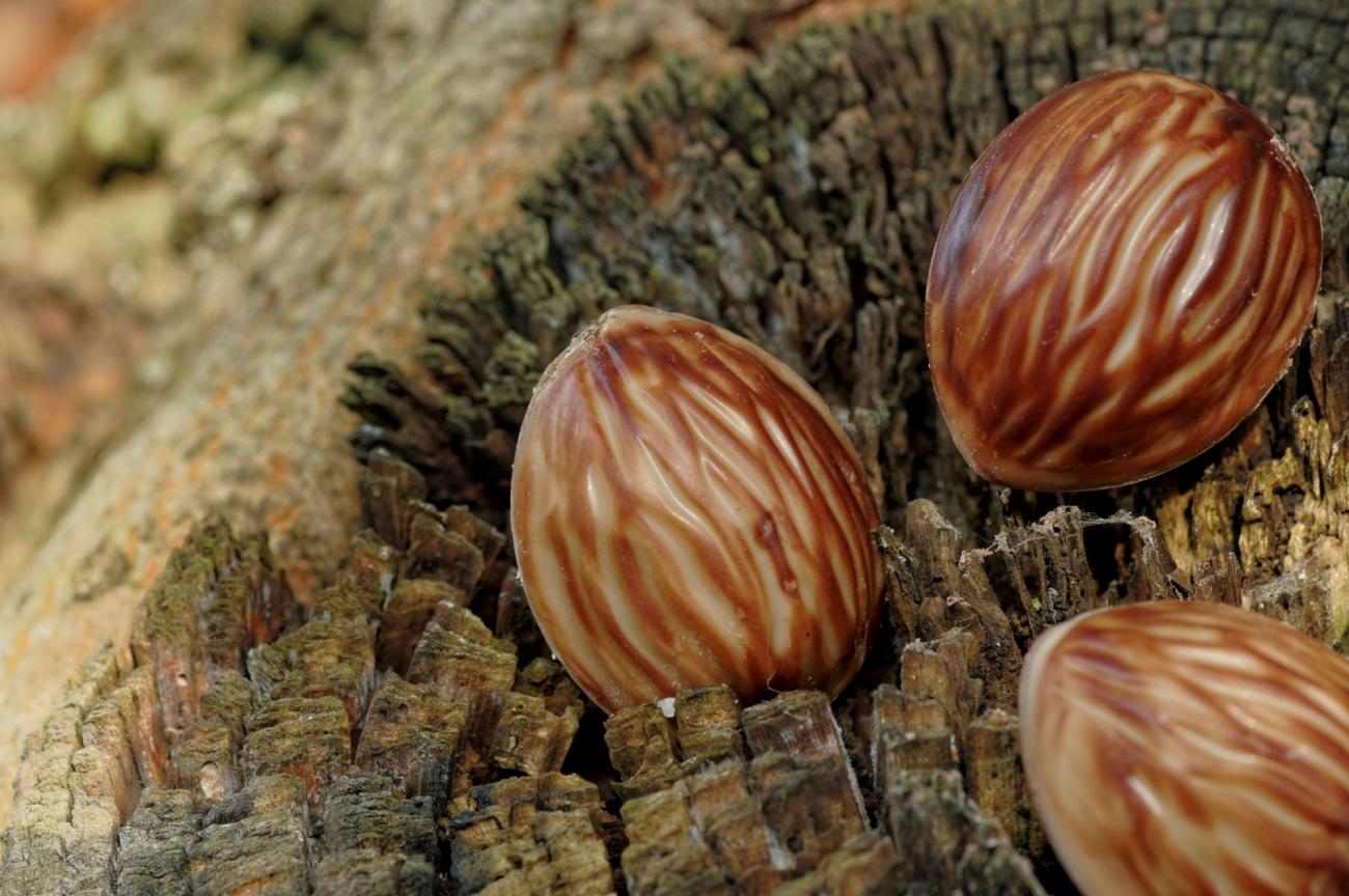 noix chocolat, douceur, chocolat, automne, nature morte, friandise