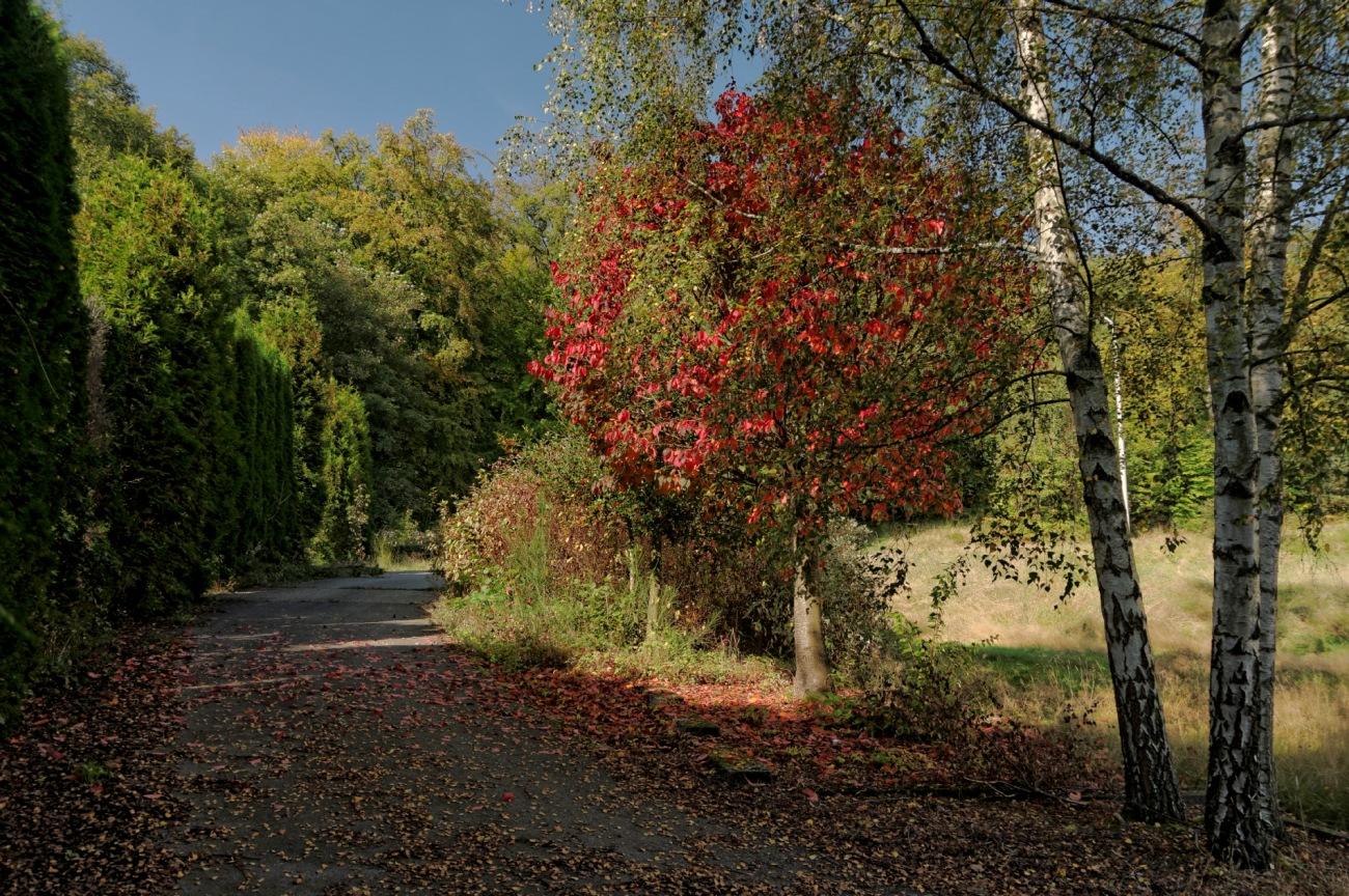 automne, arbre rouge, couleurs d'automne, parc sanatorium de Basile, Belgique