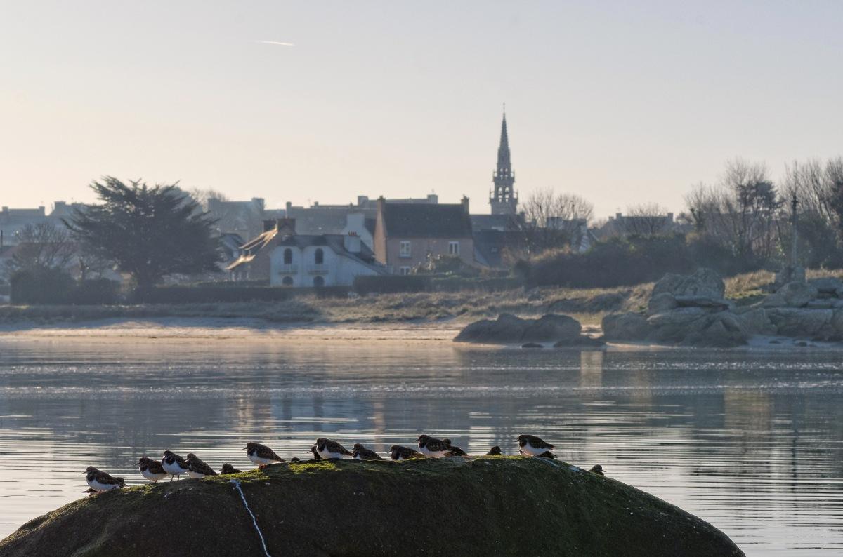 baie de Guissény, oiseaux au soleil, rochers, clocher, Guissény, finistère, bretagne
