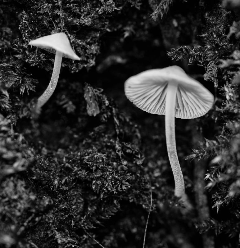 champignon, macro, noir et blanc,  smc PENTAX D-FA MACRO 100mm f/2.8 WR