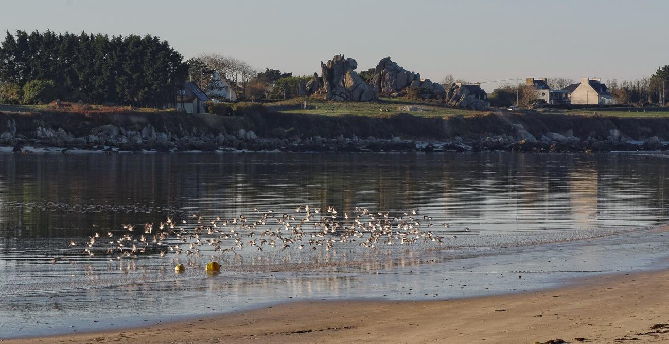 baie de Guissény, Barrachou, rochers, oiseaux de bord de mer, tourne pierre, Guissény, bretagne, finistère