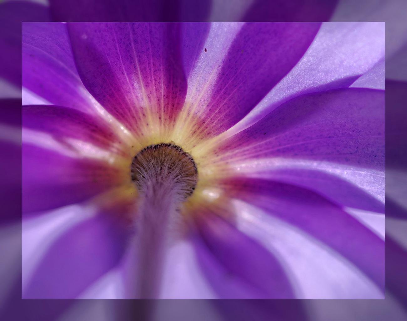 fleur, l'envers du décor