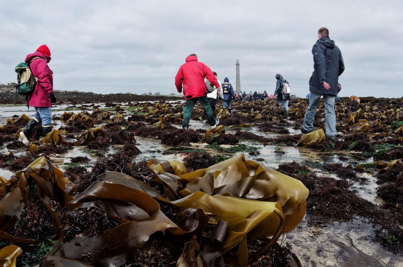 aller à pied au phare de l'île vierge pour la grande marée, coefficient 119