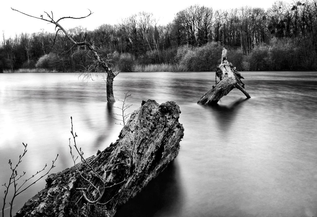 pose longue, bois mort, arbre mort, noir et blanc, étangs de Vert le Petit