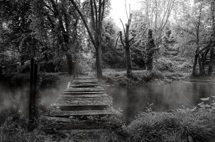 le vieil étang