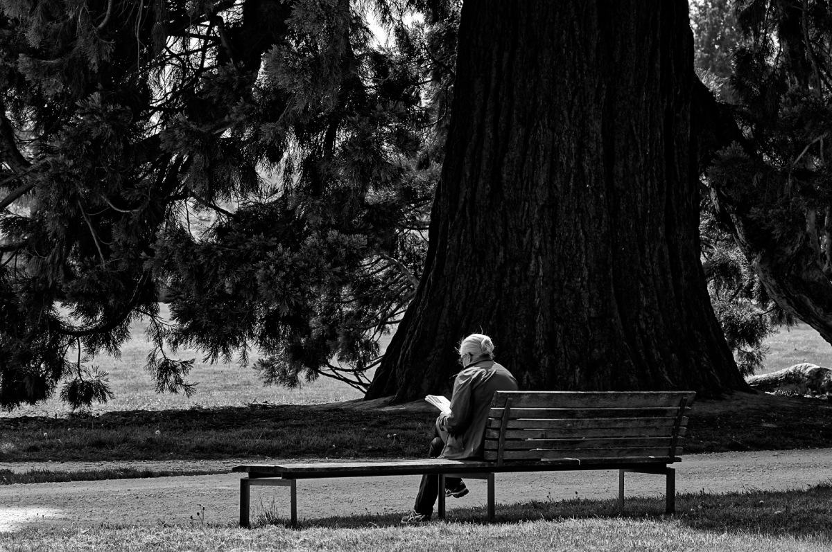 lire sur un banc, noir et blanc, au parc, parc de Rentilly, cèdre, banc,