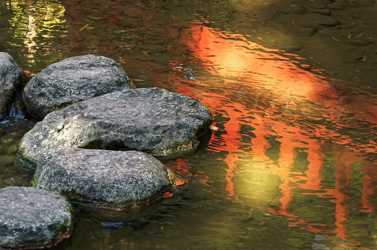 pont chinois, pas chinois, reflets, jardin asiatique, zénitude