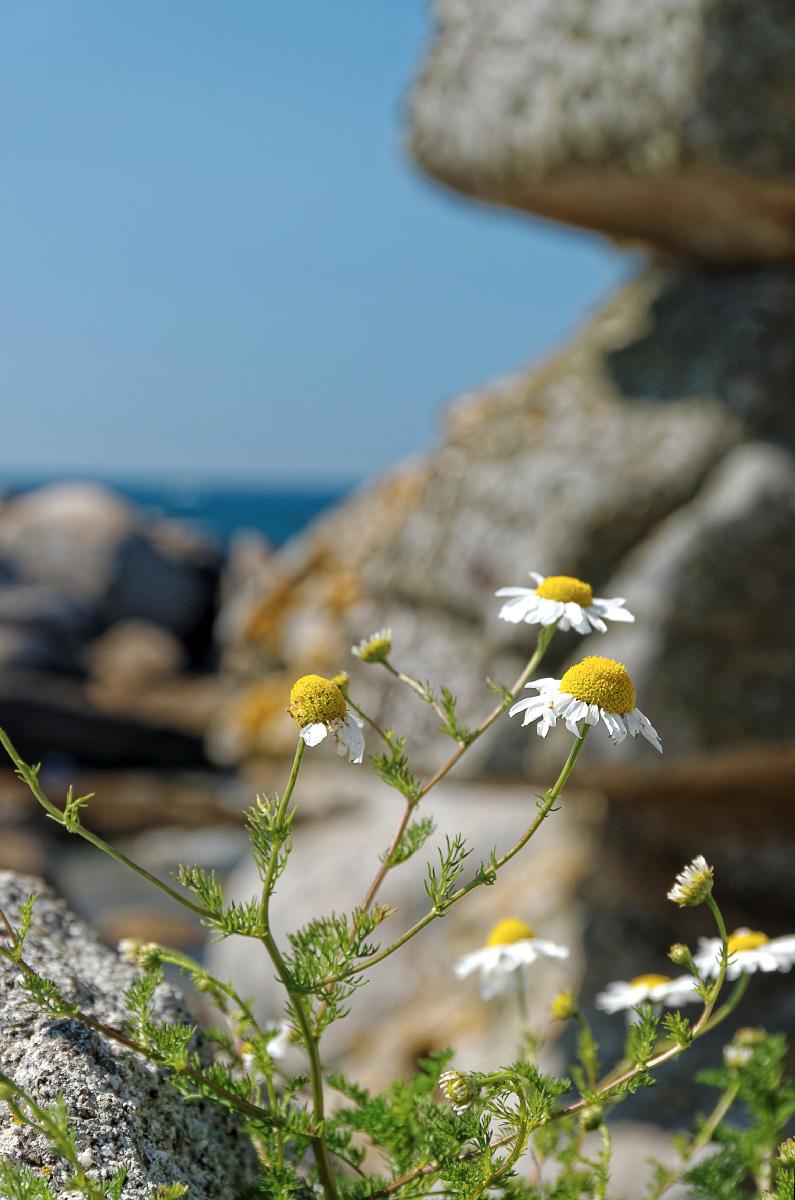 faune et flore, bretagne, finistère,  Neiz Vran,, rochers,