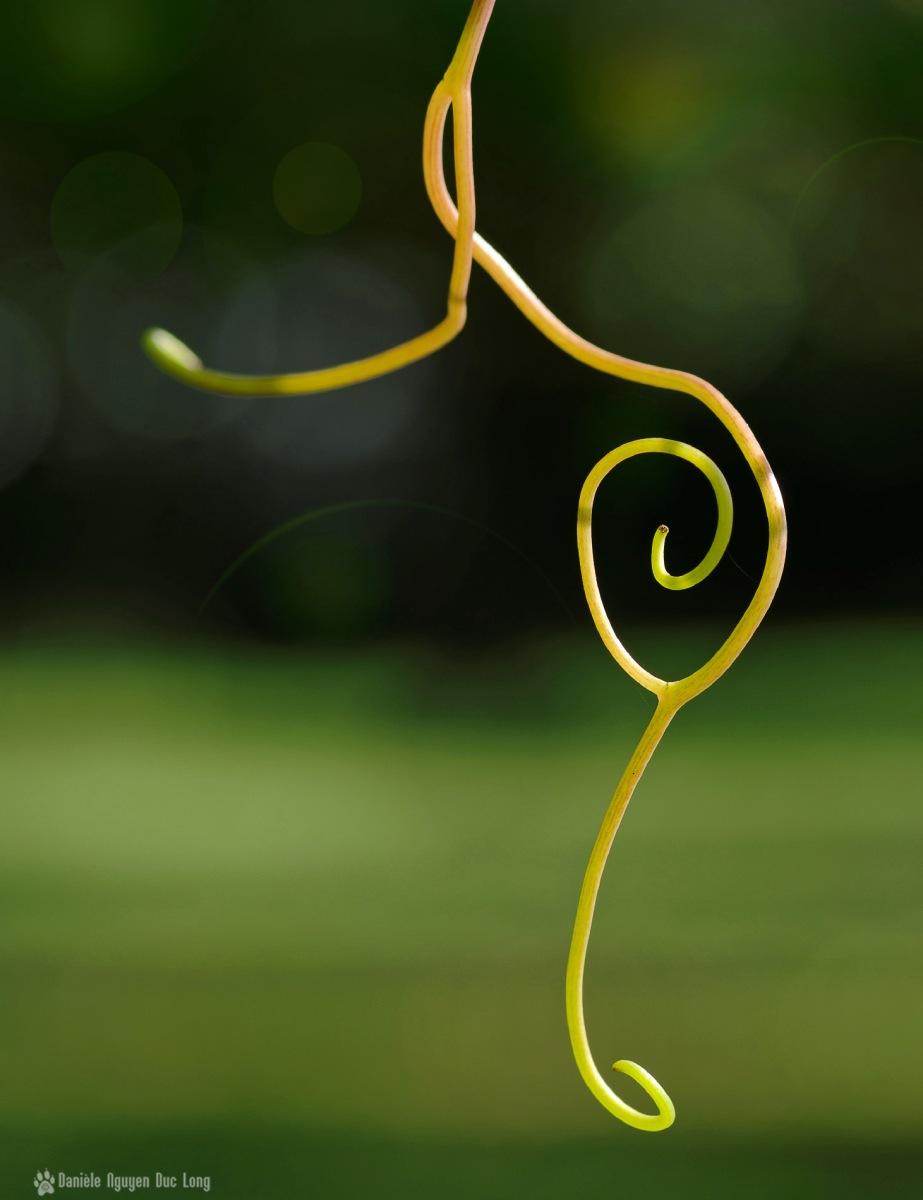 arabesque végétal