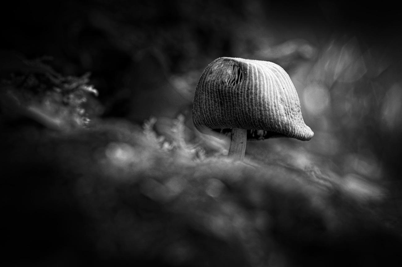 cache cache champignon version N&B, champignons, noir et blanc,