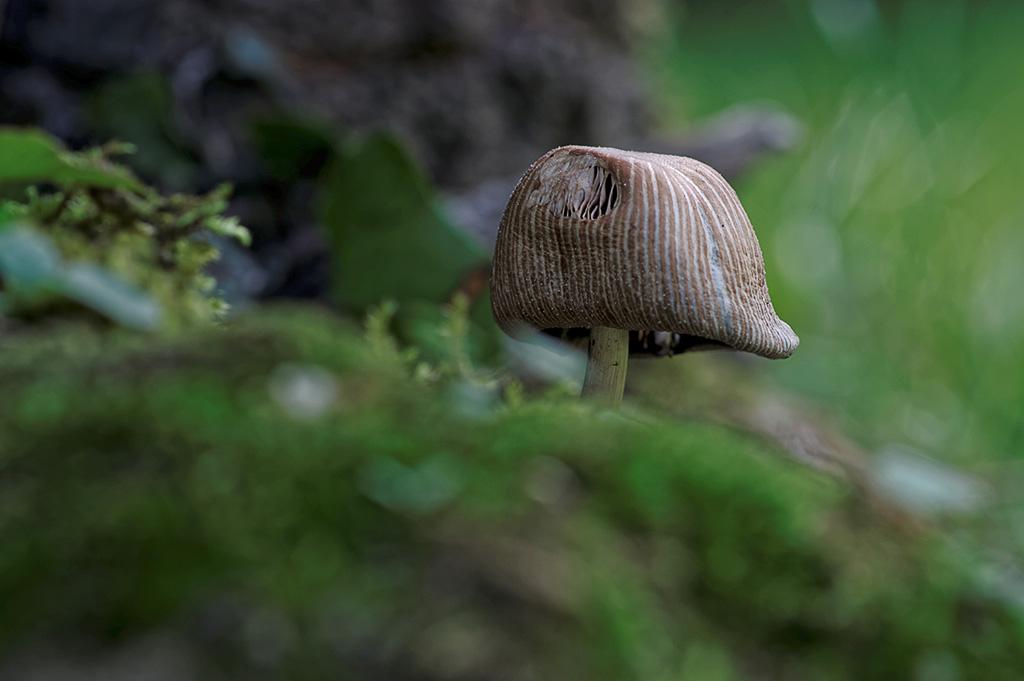 mini champignon couleurs