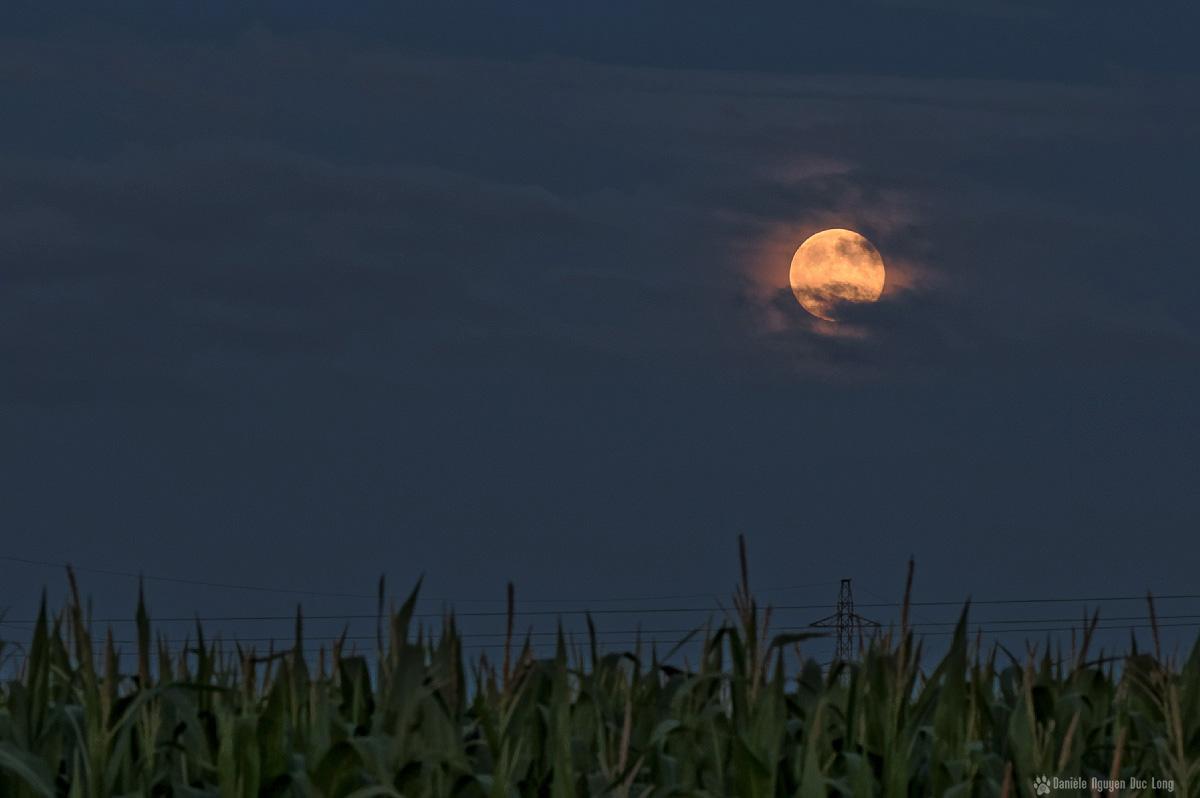 lune rousse Guissény chaps de maïs 2