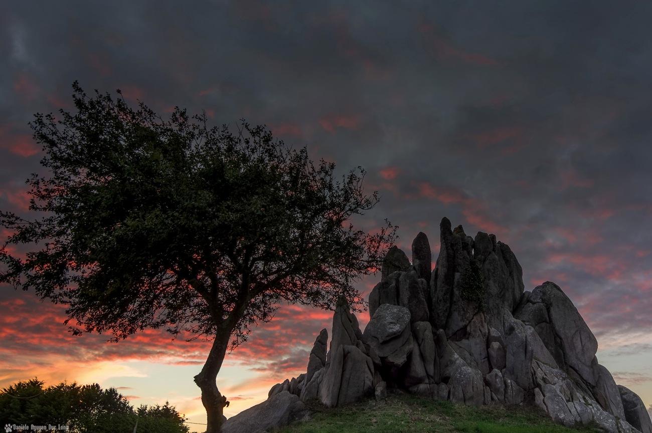 Barrachou et son arbre au soleil couchant, Guissény,Bretagne, Finistère