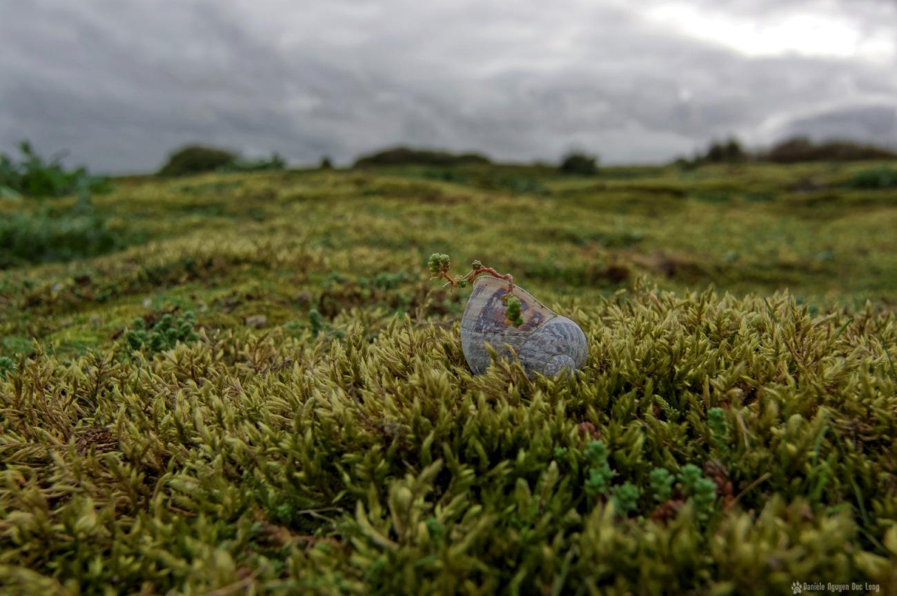 coquille d'escargot dunes Keremma et Goulven 1
