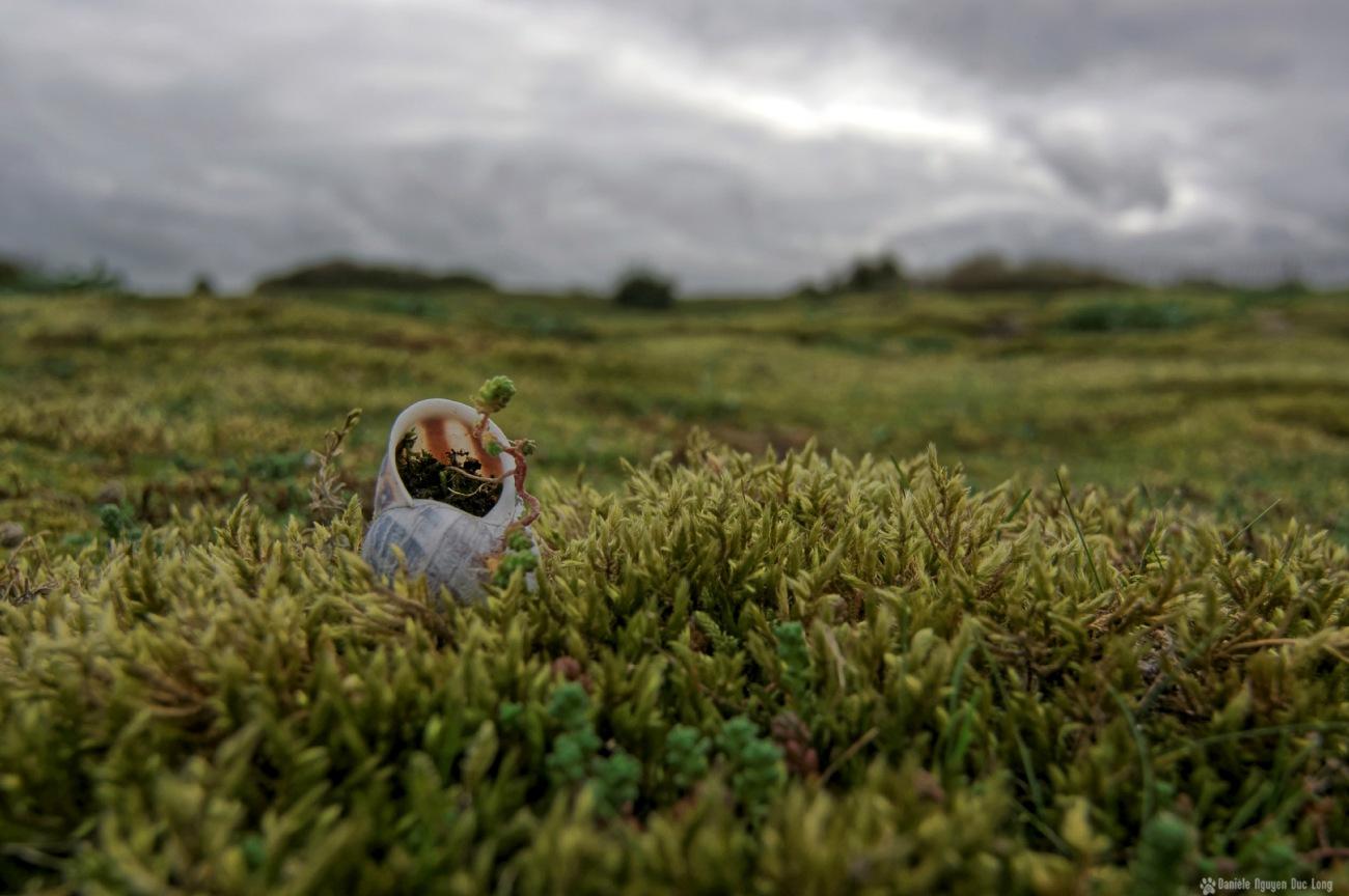coquille d'escargot dunes Keremma et Goulven 2