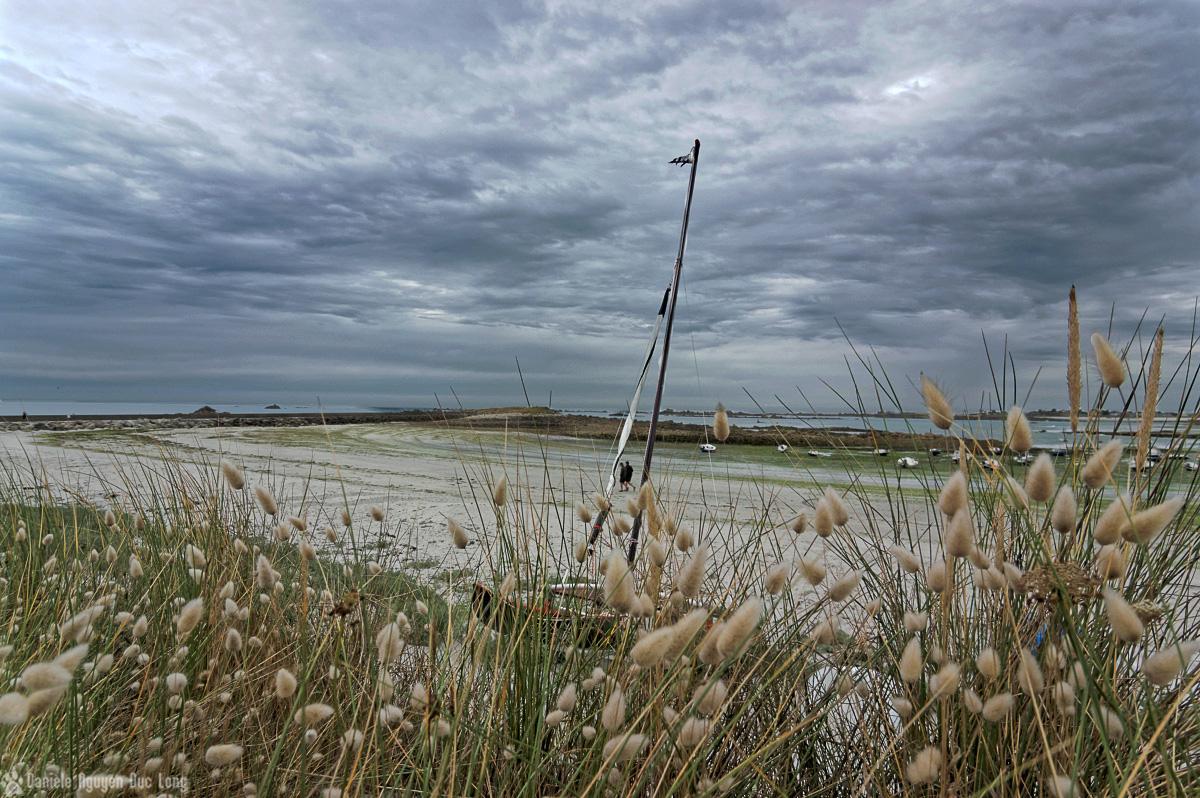 port du Curnic derrière les queues de lapin, promenade sous un ciel plombé au Curnic, lagurus ovatus, Guissény, Bretagne, Finistère