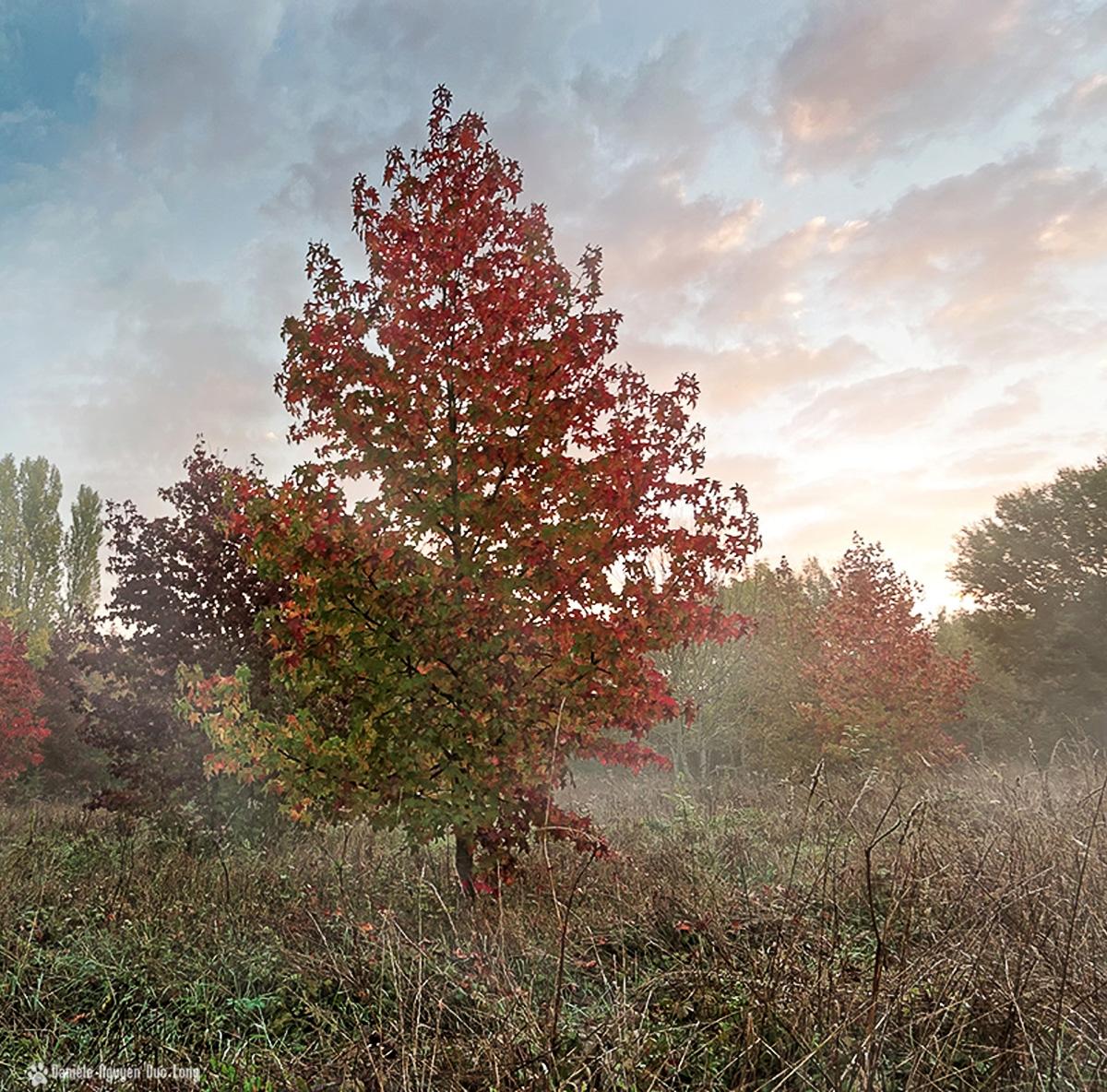 lever soleil bois templiers et couleurs d'automne et brume
