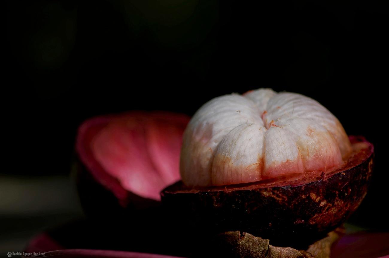 mangoustan - fruit et coque 1, Garcinia mangostana,