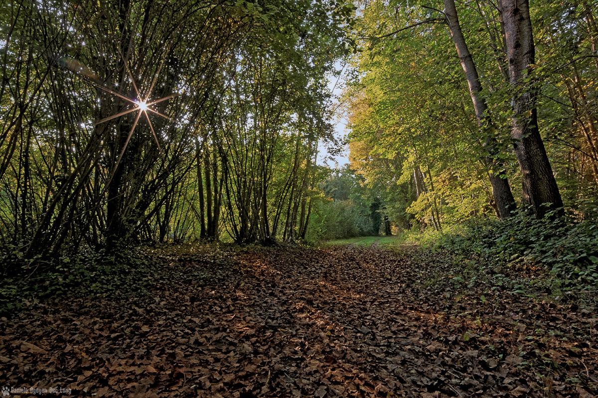 soleil étoile bois Valnay couleurs d'automne 01