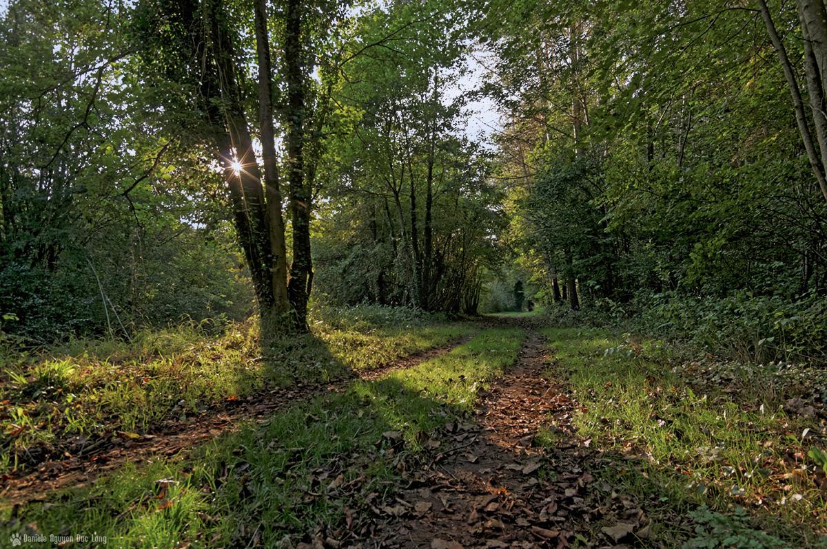 soleil étoile sur chemin bois aux couleurs d'automne