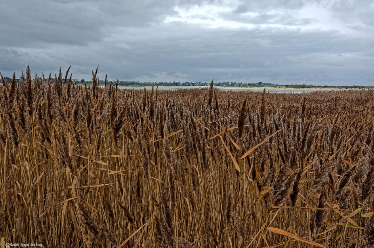 baie de Goulven aux couleurs brunes de l'automne