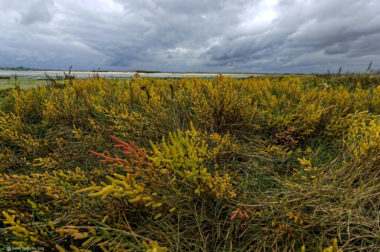 baie de Goulven couleurs d'automne