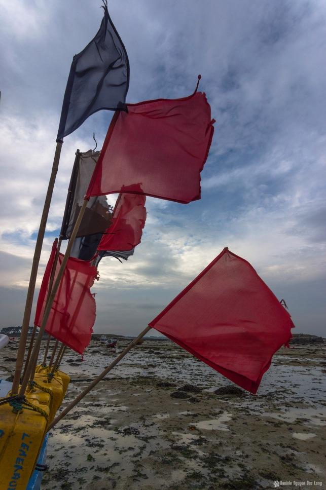 drapeaux de caseyeurs Lilila 02