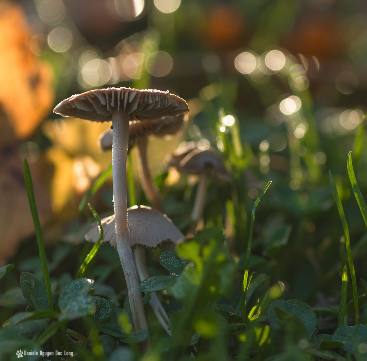 rosée bokeh champignons