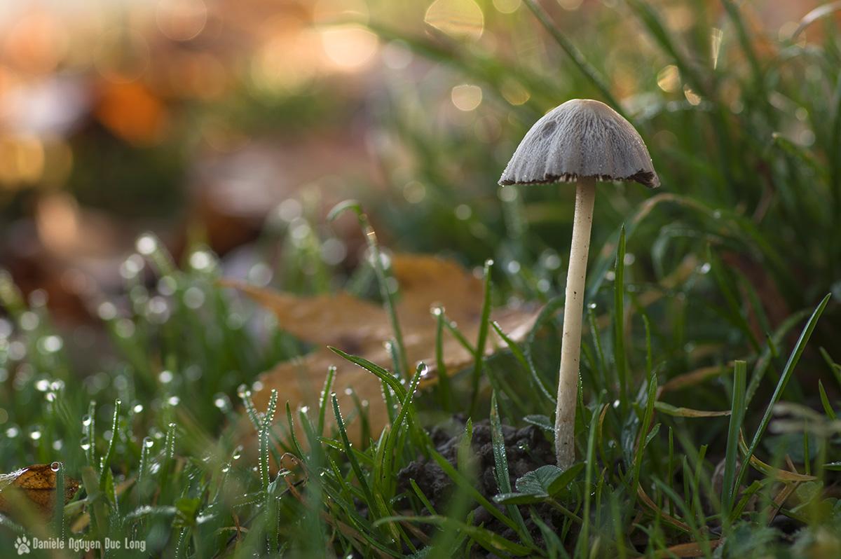 roséeet petit champignon1